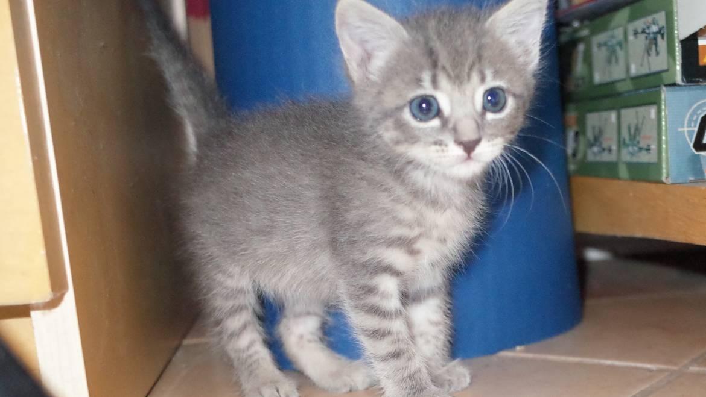 Loving Kittens Matter(s)